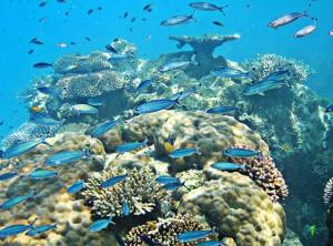 Вред для жизни океана